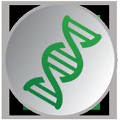 Génétique Orvia (Canard mulard)